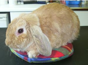 Happy bunny on a cosy SnuggleSafe heatpad